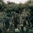 Tolkien Tribute: Lost Stanzas from The March of the Ents